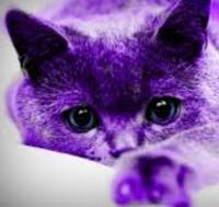 PurpleCat @ Solway 2019